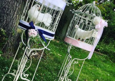White Dove Release special occasion