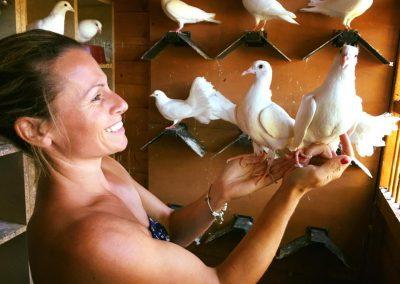 Dove Release Hertfordshire