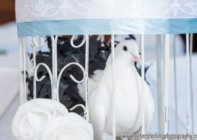 Wedding Dove Release Hertfordshire